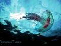 medusa-10