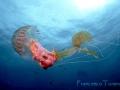 medusa-13