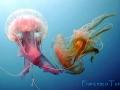 medusa-2