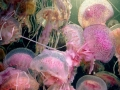 medusa-7